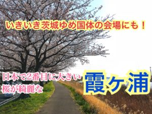【霞ヶ浦】茨城県の観光地!めっちゃ広くて、桜が綺麗な霞ヶ浦をご紹介!【関東めぐり茨城編】