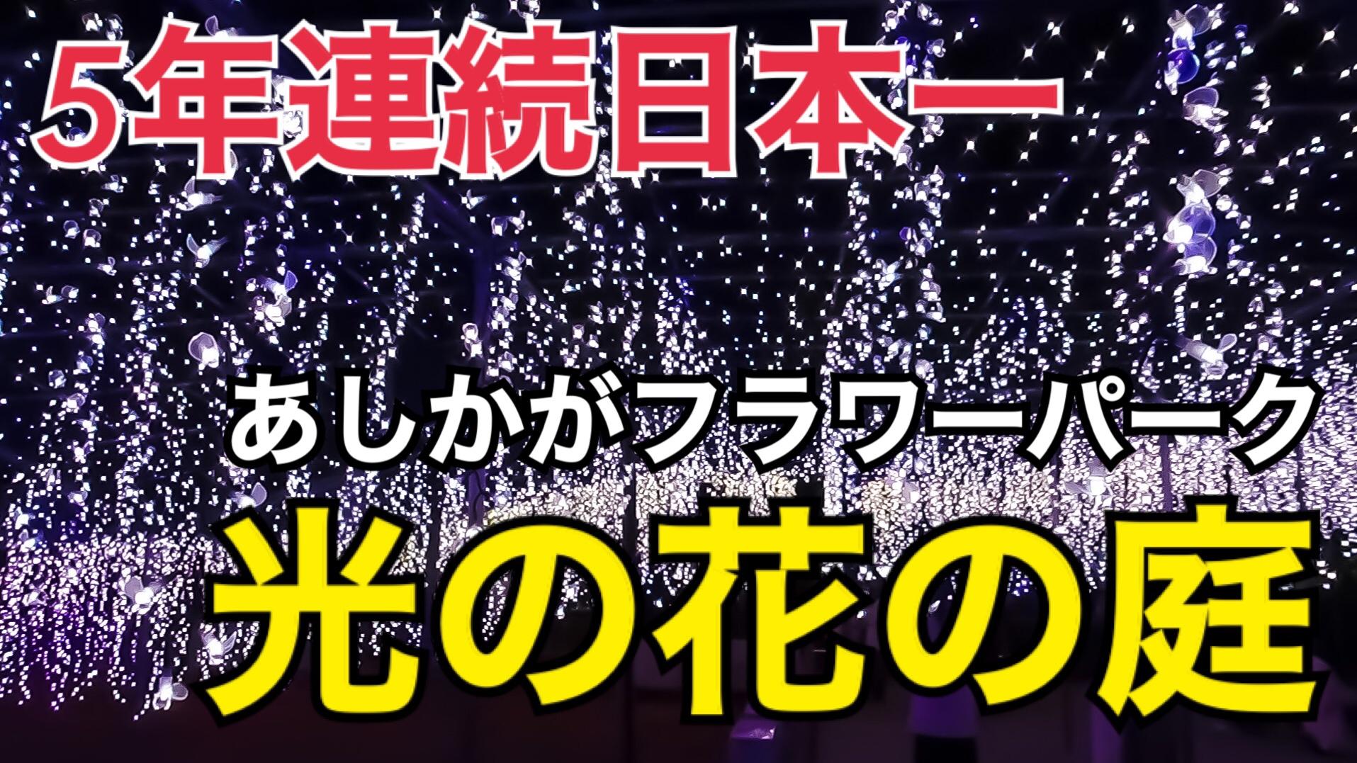 日本一のイルミネーション!あしかがフラワーパーク「光の花の庭」に行ってきた!【関東満喫の旅】