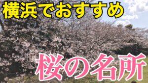 横浜で桜を楽しむ!横浜のおすすめ桜スポットを紹介します!お花見気分を味わおう!【横浜さくら観光】