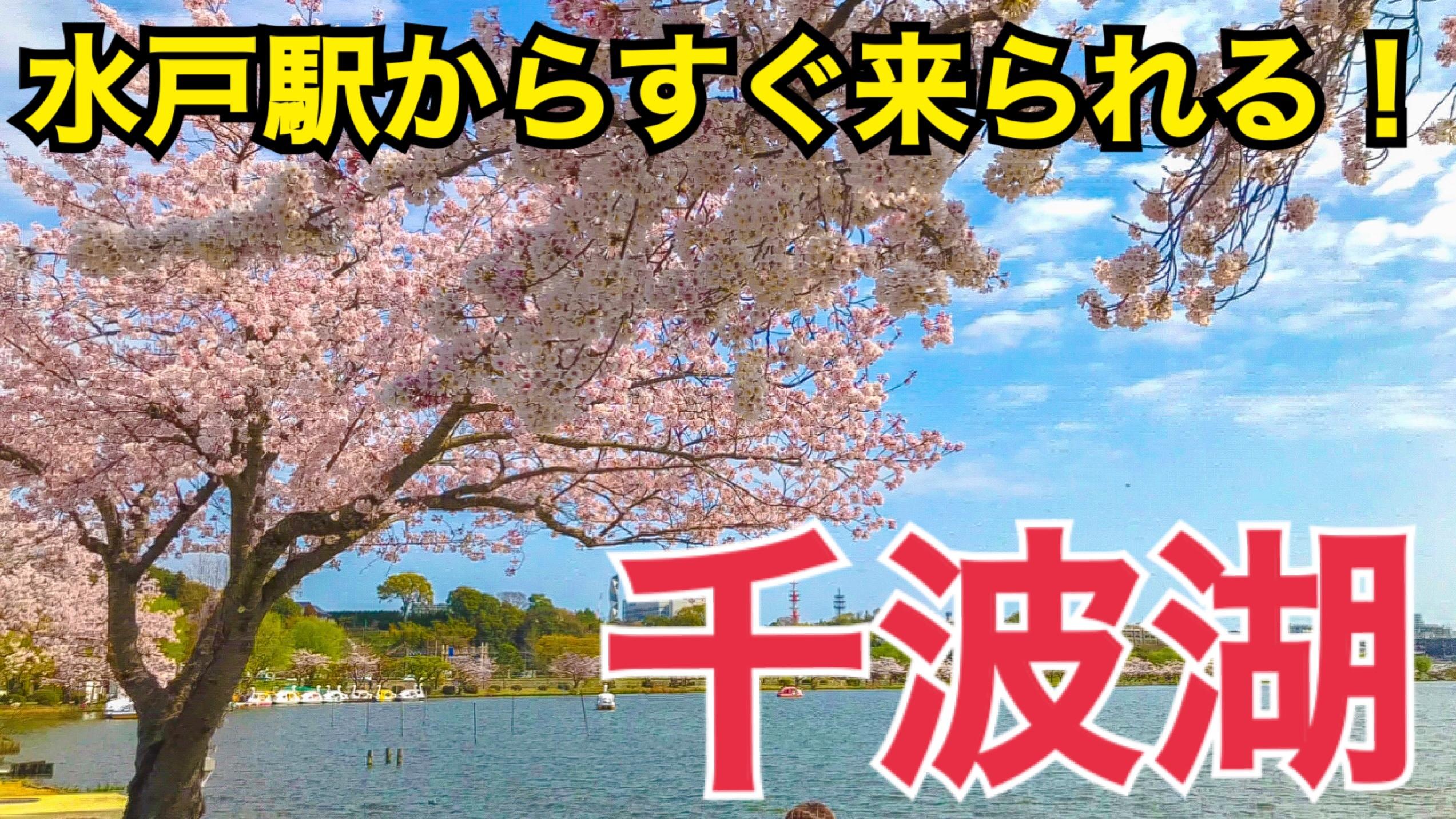 途中下車ですぐ来られる!水戸の千波湖を観光!乗り換え時間でお手軽観光【茨城魅力発見の旅】
