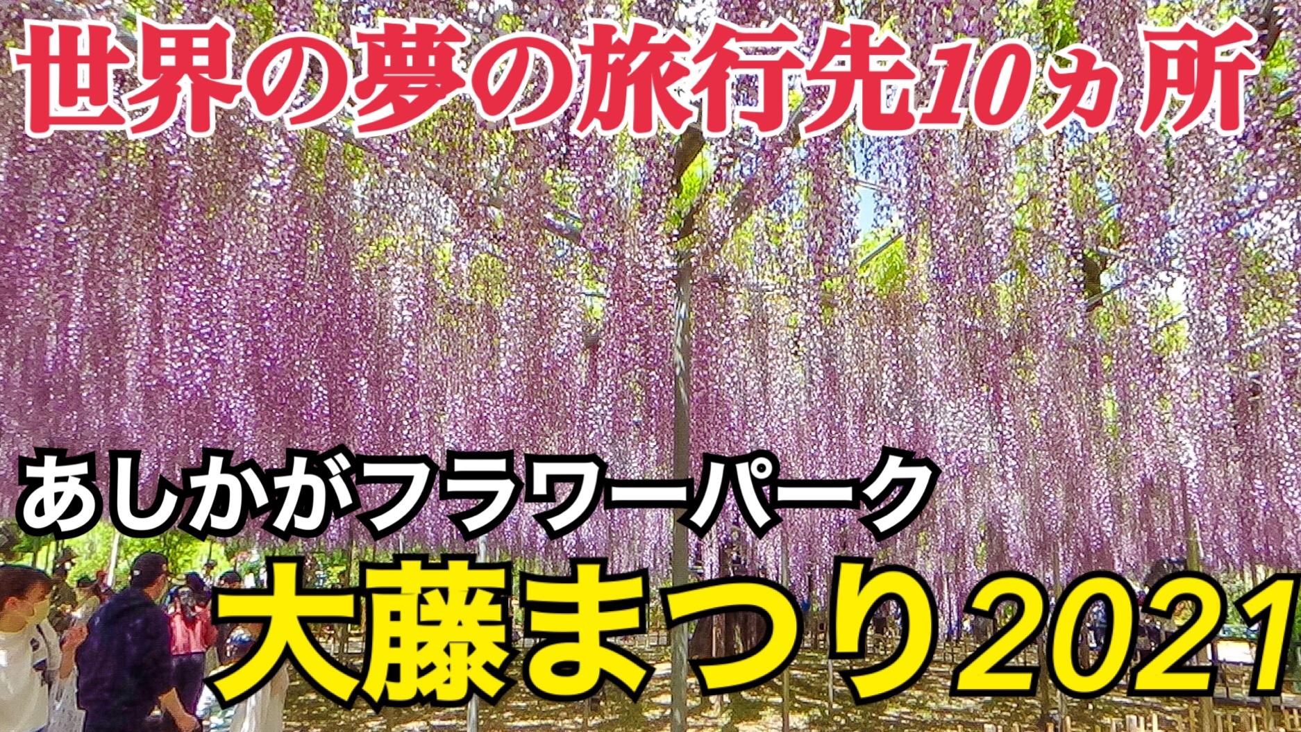 世界が認めた美しさ!あしかがフラワーパークの大藤まつりへ!藤の花が美しい!【あしかが大藤の旅】