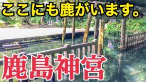 奈良の鹿と深い関係?!茨城県の鹿島神宮を参拝!東国最古の鹿島神宮はどんな感じ?【茨城あやめ祭りの旅】